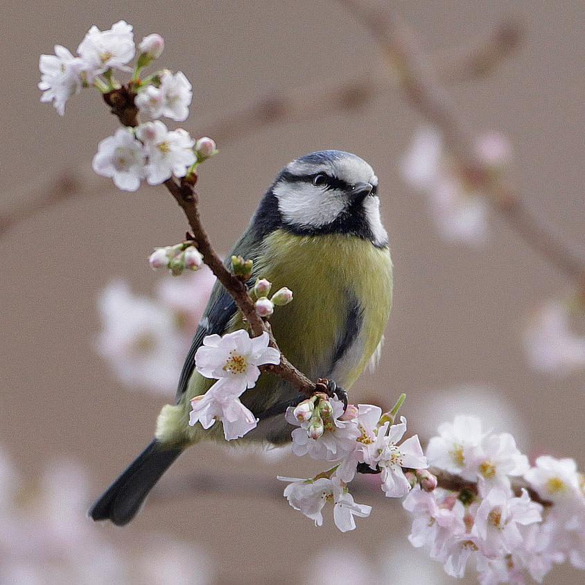 A madarak énekeit is lekottázzák
